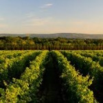 Nyetimber-150x150 Vineyards of Sussex for the converted!