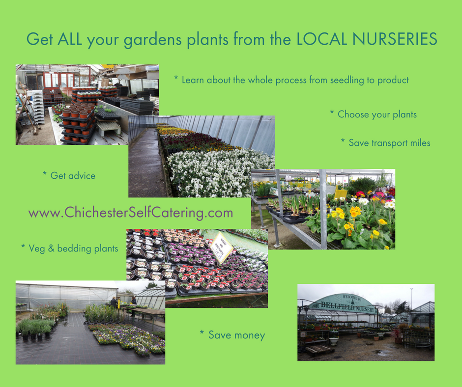 Local-nurseries When you stay get all your bedding plants and veg from the local growers and save a fortune!