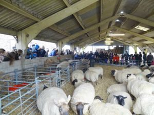 lambingshed-300x225 Easter weekend 2018 - things to do