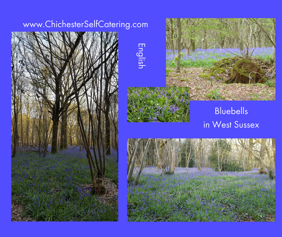 bluebells You can never have too much time with bluebells!
