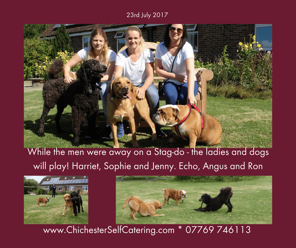 While-the-men-were-away-on-a-Stag-do-the-ladies-and-dogs-will-play Happiness - enhanced with doggy friends!