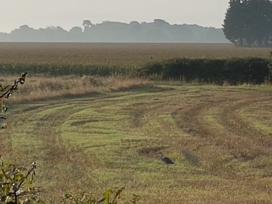 Autumn-fields.heron_.950 Selsey Outdoor & Walking Festival May - June
