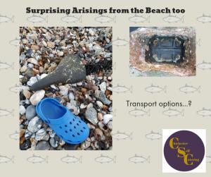 Surprising-Arisings-from-the-Beach-2-300x251 Surprising arisings from the beach!