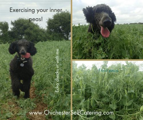 Exercising your inner peas! CSC