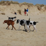 dunes-and-dogs.1000px-150x150 Christmas and New Year at Chichester Self Catering