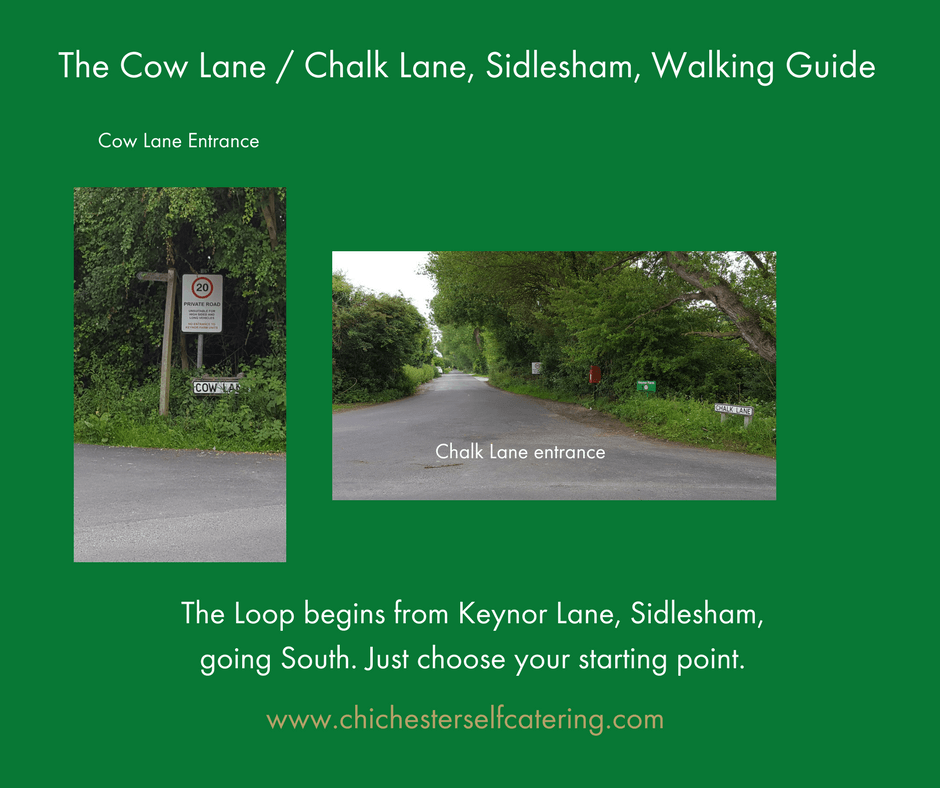 CowLane.chalkLane1 The nearest 30 minute dog walk for my guests