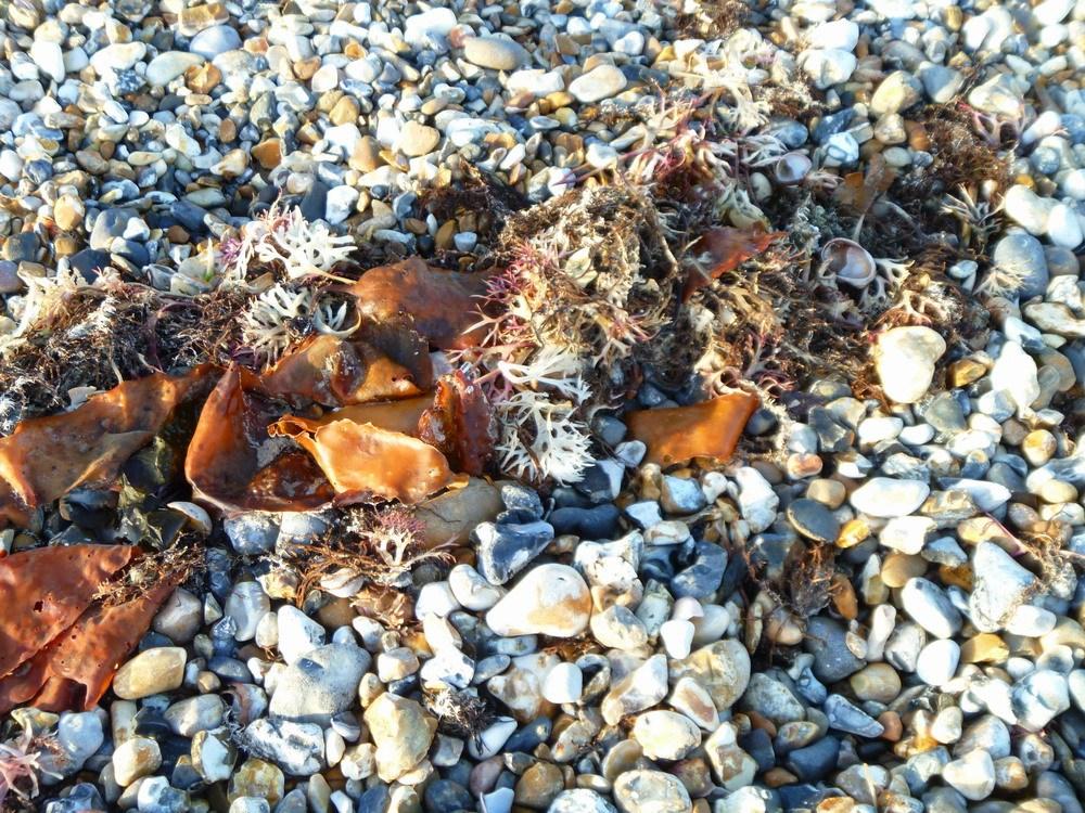 diagonal-seaweed.1000px #2Minutebeachclean