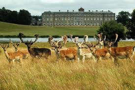 Petworth-House.fallowdeer Dog-friendly places where humans can eat in West Sussex!
