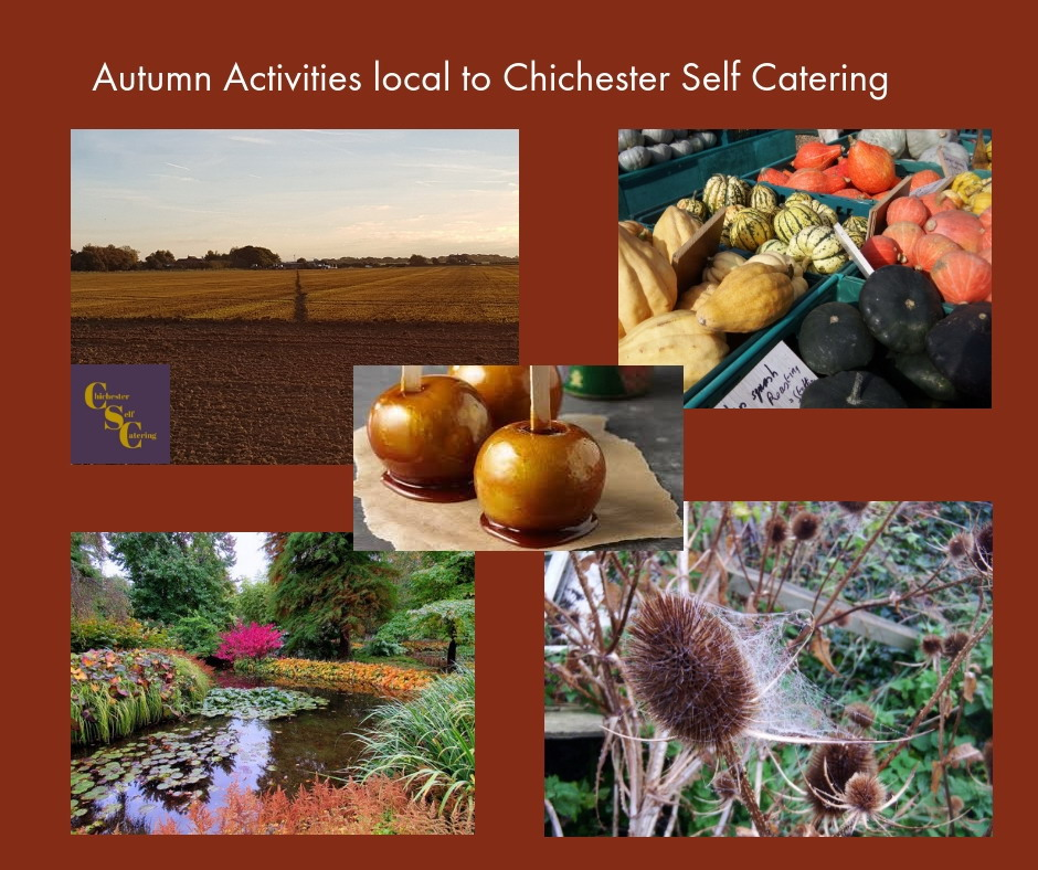 Autumn-Activities-local-to-Chichester The farming year is turning - it's Autumn